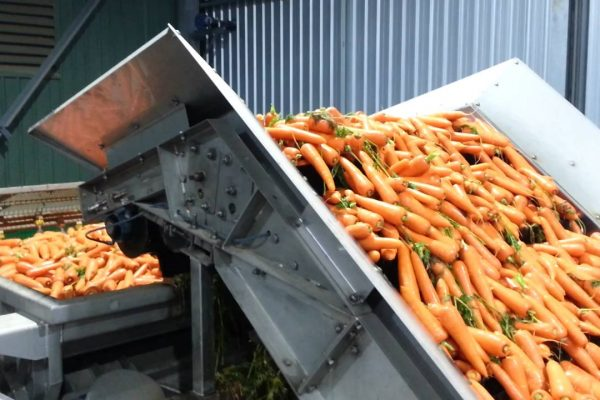 Milo-FAIS_Food processing_carrots 01